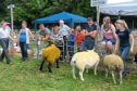 The Banchory Show.  Picture by Kath Flannery