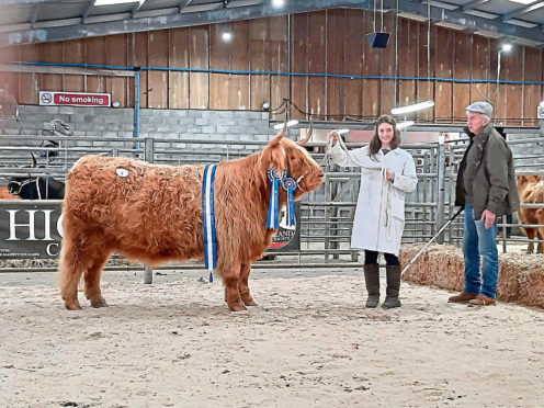 The top priced Highland female at Oban made 8,000gn. She was   Anna of Eilean Mor from Karen and Michael Macgregor, shown here by Jade Brown.