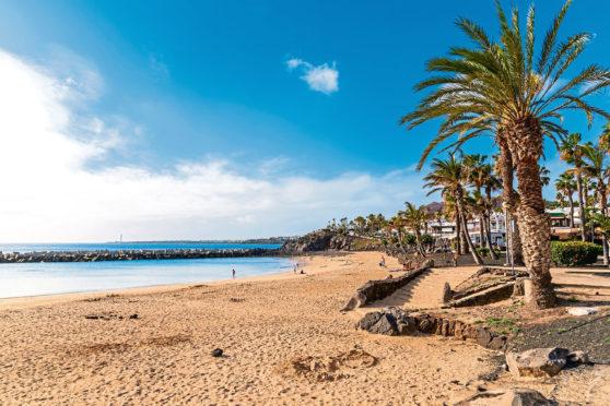 Flamingo beach with palm trees in Playa Blanca holiday village on coast of Lanzarote island, Spain