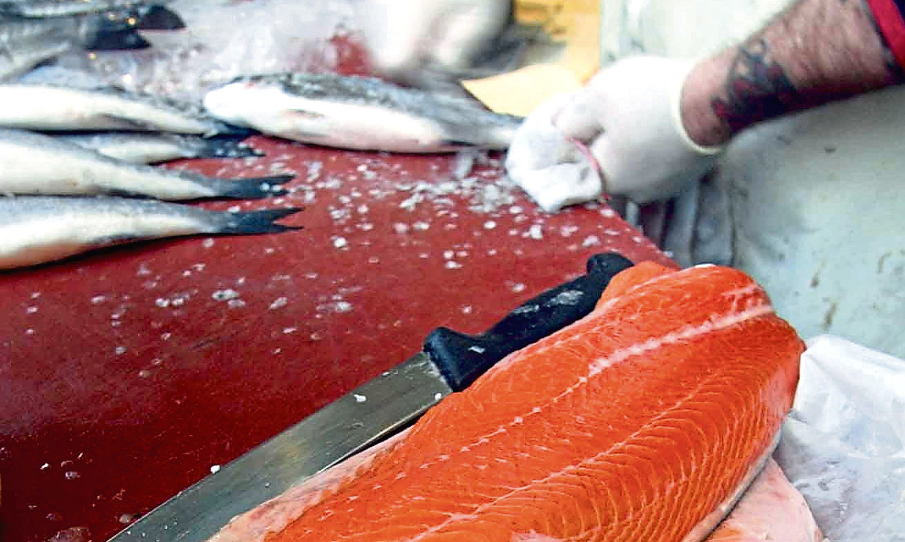 Salmon fillets on sale at a local fish market.