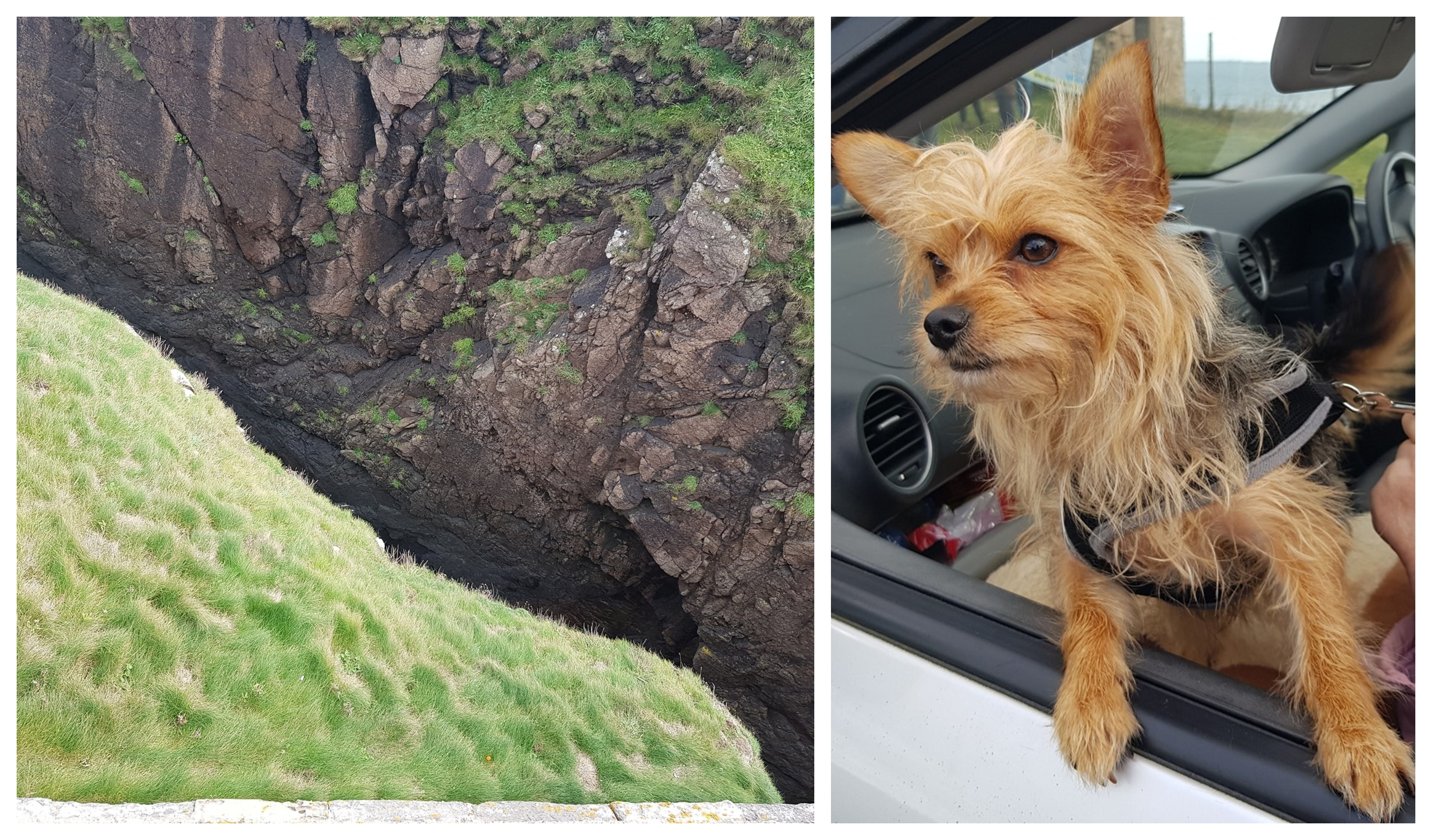 Coastguard teams rescued Billy the small chihuahua/yorkie cross after falling 25 meters over a cliff edge.