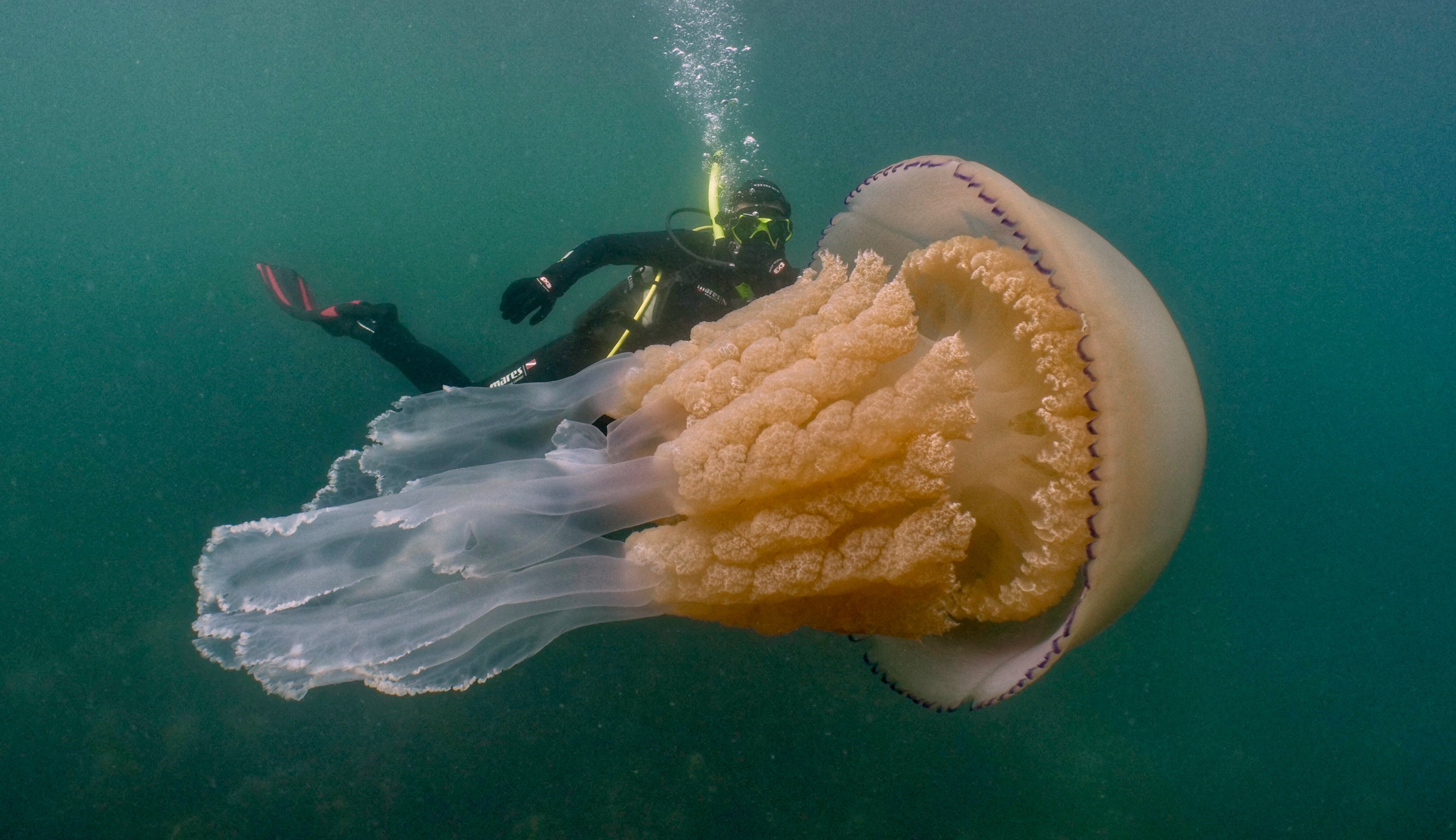 Lizzie Daly with a Jellyfish off the cost of Cornwall, Photo by Dan Abbott