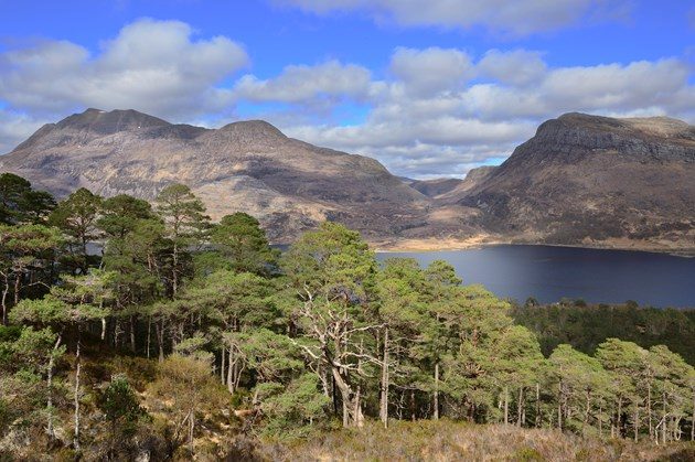 An additional 20,000 trees will be planted in and around Beinn Eighe next year as part of work to expand native woodlands on some of Scotland's finest National Nature Reserves (NNRs)