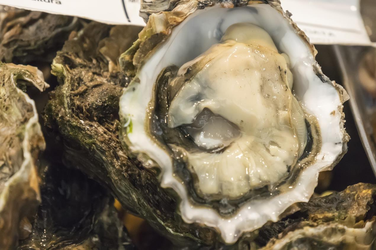Restoring native oyster (Ostrea edulis) beds in Scotland has the potential to give a £3.5m boost to the UK economy and create jobs in some of the most economically marginal areas of the Western and Northern Highlands and Islands.