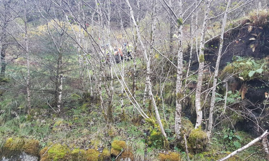 A tree surgeon was rescued after falling from a tree on the Ardnamurchan peninsula