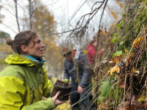 RBGE Conservation Scientist Dr Aline Finger planting alpine blue-sowthistle at Braemar