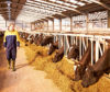 The database has been launched by EU dairy farmers' co-operative Arla.