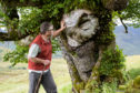 """The Last Ent of Affric has been hailed for its efforts as the """"symbolic leader"""" in the battle against Dutch elm disease"""
