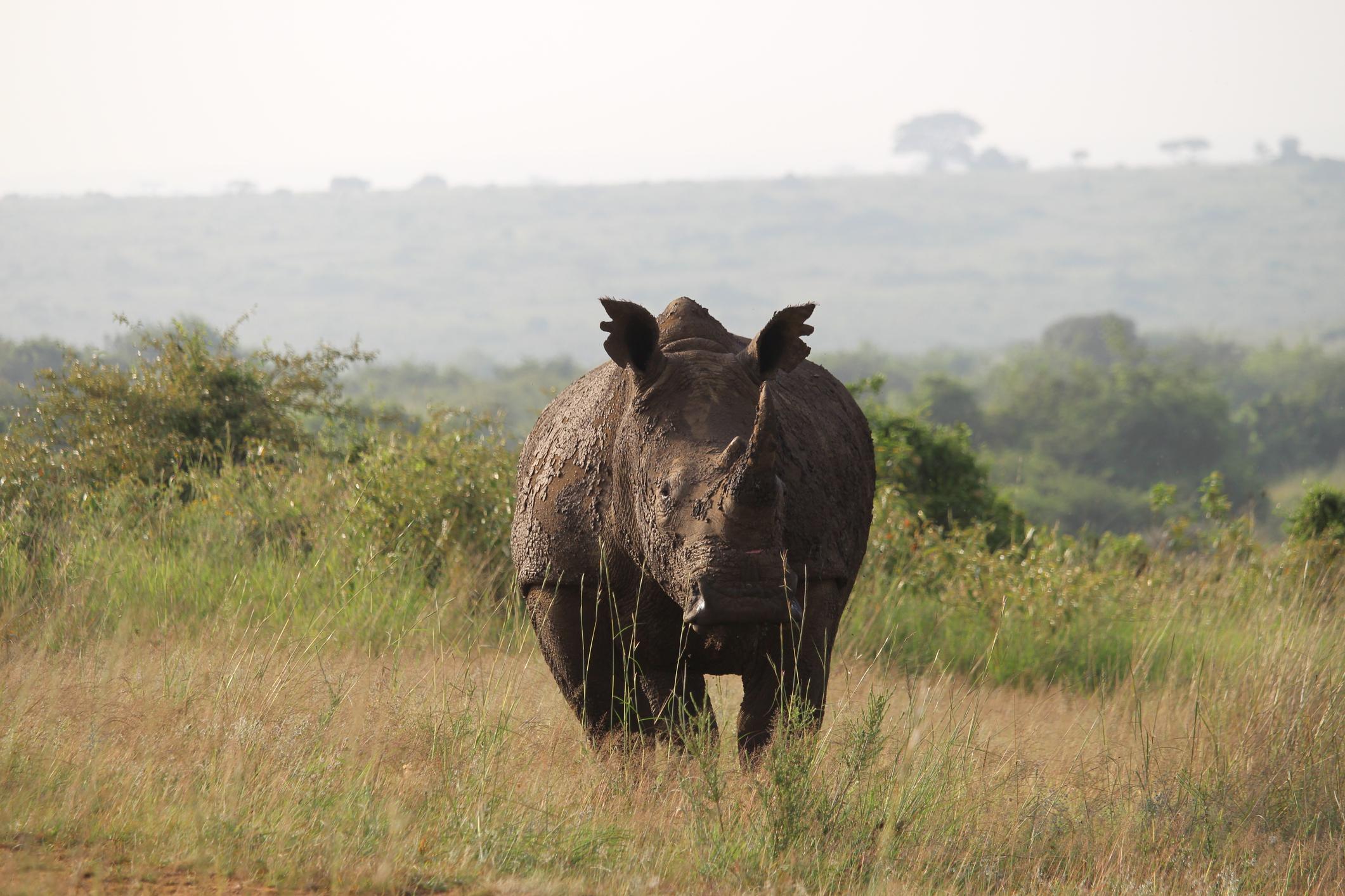rhino at Nairobi National Park