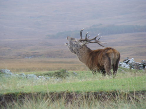 There will also be an impact from the reduction in venison sales.