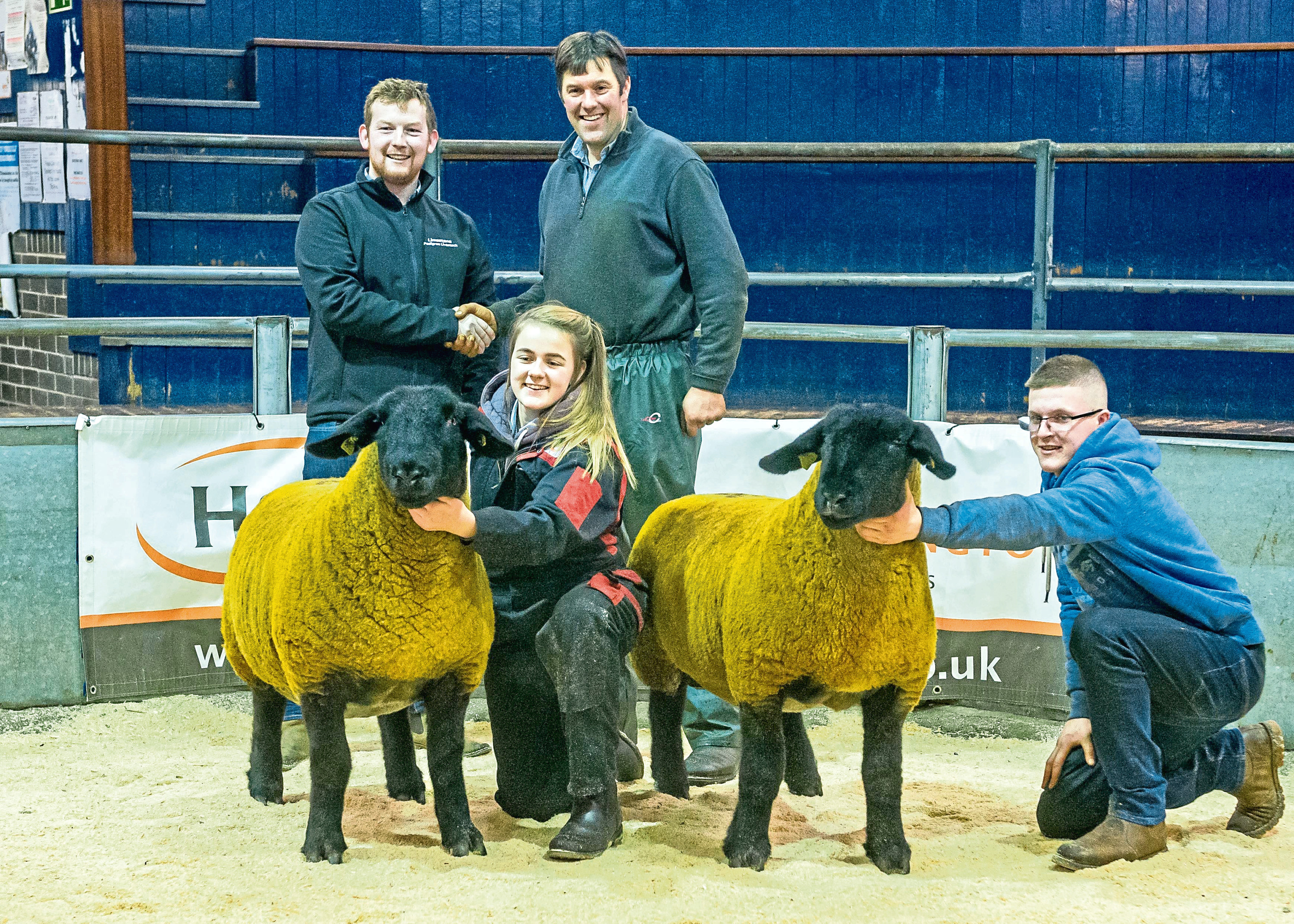 The two 9,000gn Birness gimmers with, on the back row from left, Mark Priestley and Melvin Stuart. At the front are Gemma Stuart and Murray Stuart.