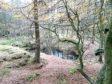 Tollohill Wood
