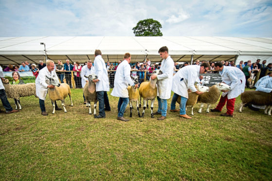 RHASS has announced the judges line-up for the 2020 Royal Highland Show.