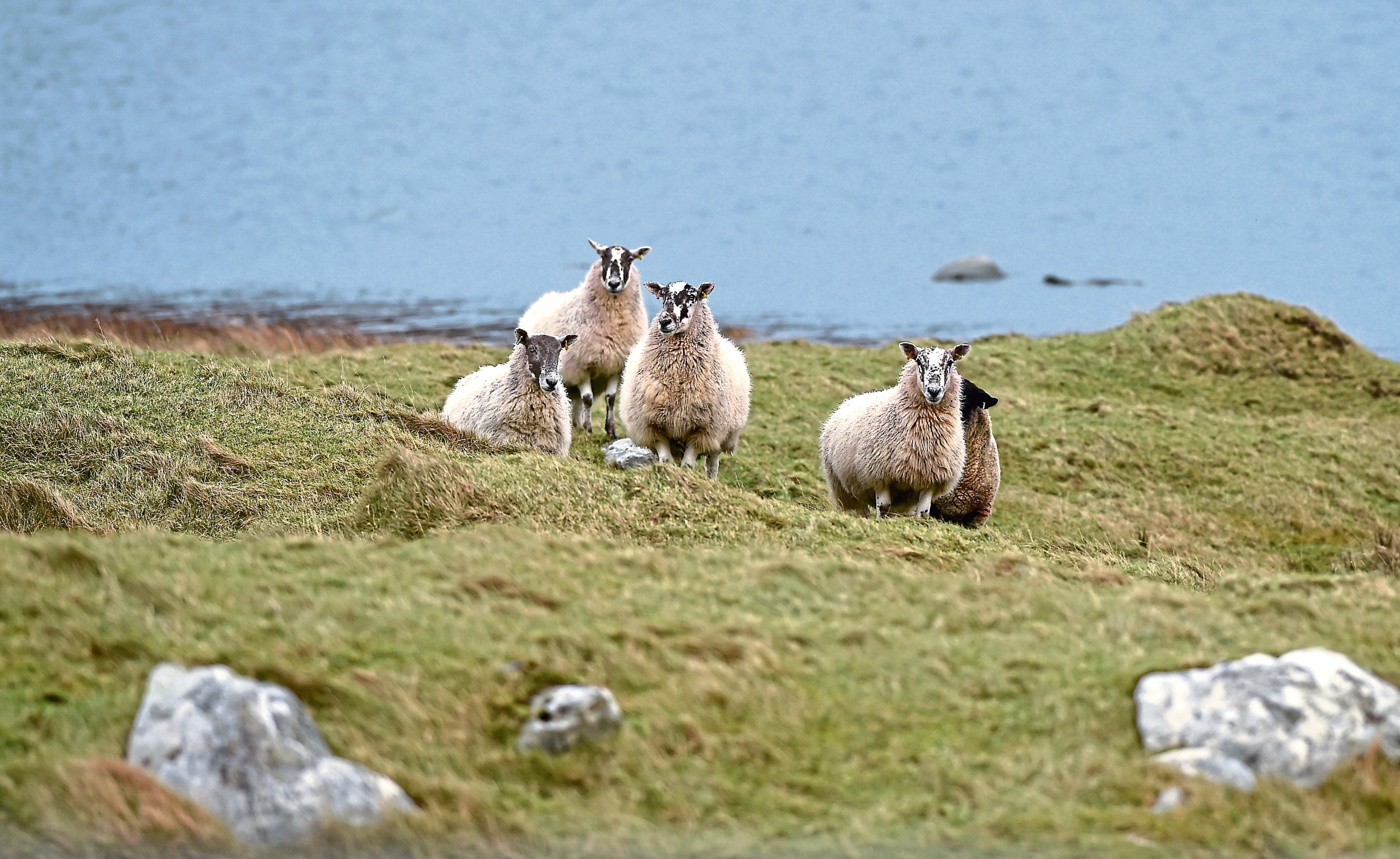The SCF believes crofting is coming into its time.