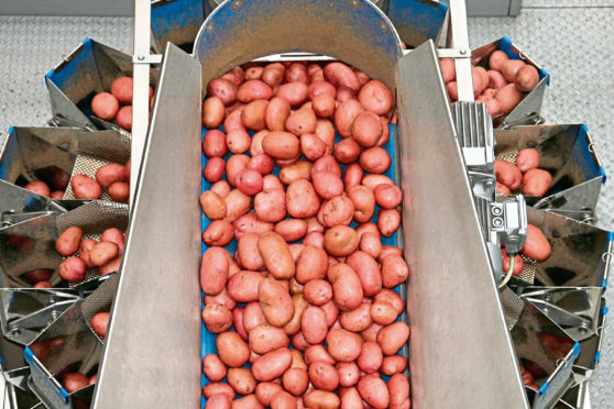 Rooster potatoes are processed at Albert Bartlett, Airdrie.