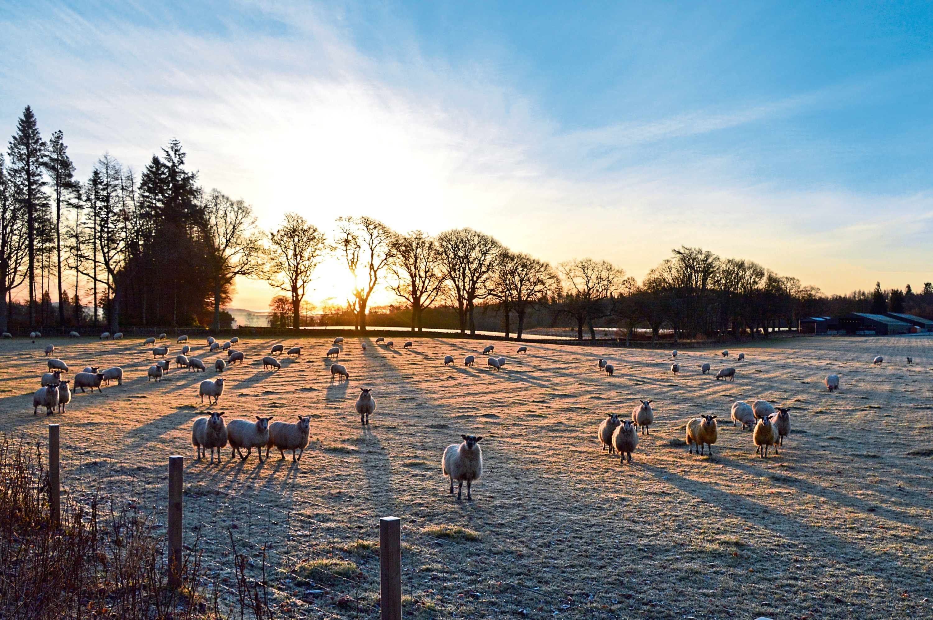 Scottish farms can expect to receive government subsidy at the current levels for 2020.