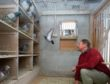 Pigeon fancier, Rick Richards is pictured at home with his beloved pigeons.  Pictures by JASON HEDGES
