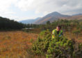 Trainee Nick collecting Juniper seed