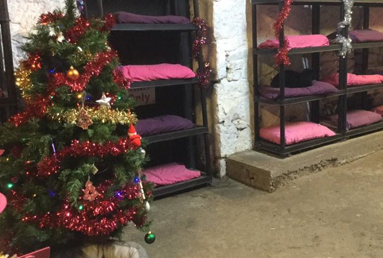The festively decorated Cats Hotel at Willows