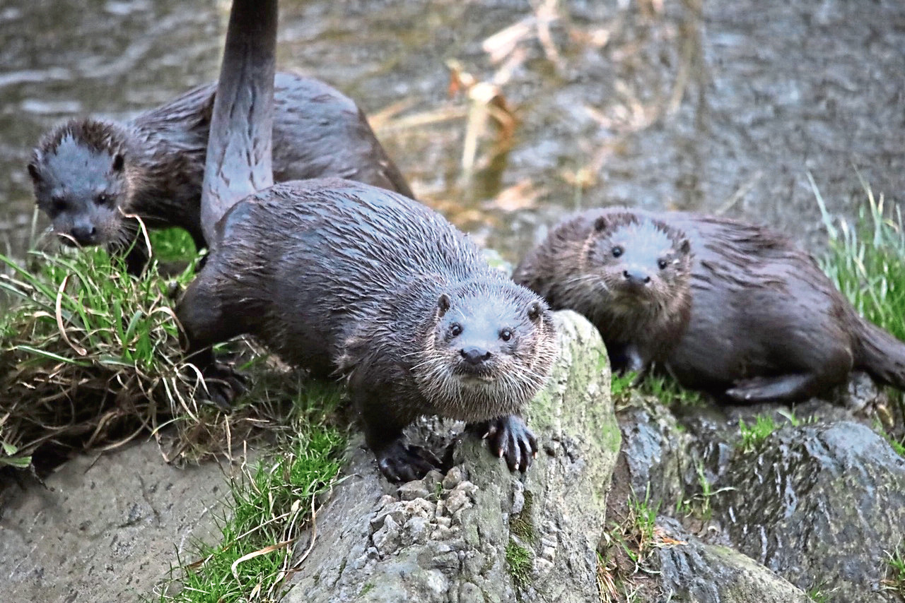 Otters Brig of Balgownie Hogmanay