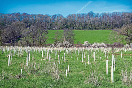 Forestry investors are outbidding farmers, claims Strutt and Parker.