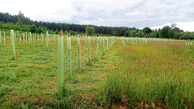 There are calls for around 100 million trees a year to be planted from 2023 up to mid-century.