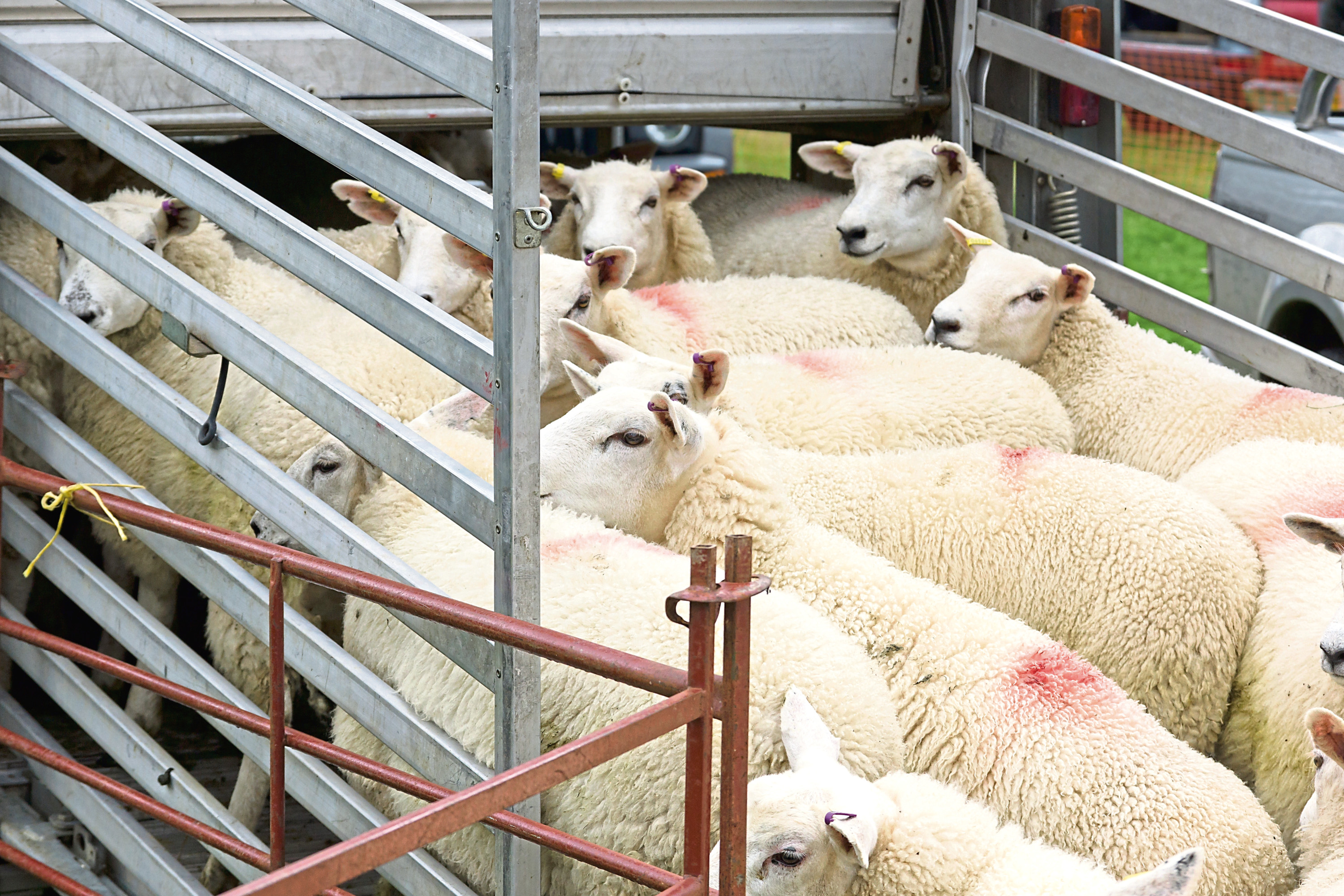 Figures from rural insurer NFU Mutual reveal the value of livestock theft has increased to £3 million in the last two years.