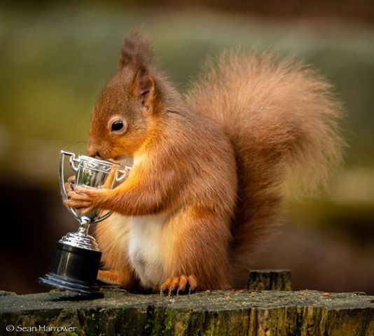 The red squirrel with the trophy. Picture by Sean Harrower