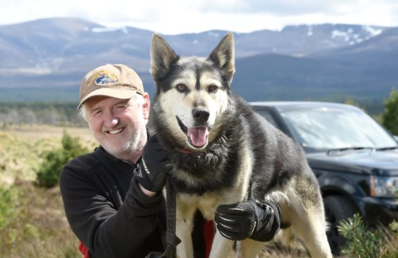Alan Stewart with one of his Alaskan Huskies. Picture by Sandy McCook.