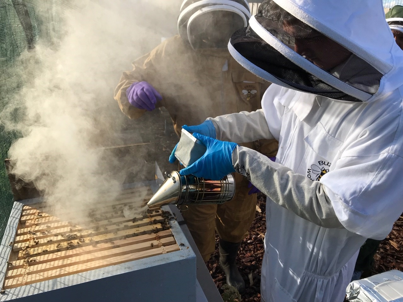 Beekeeping has been causing a buzz at Mearns Academy