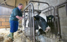 Extra checks on animals and animal products could spark a surge in demand for vet services in the wake of Britain's exit  from the EU