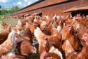 The case was found to be a non-notifiable strain of avian influenza.