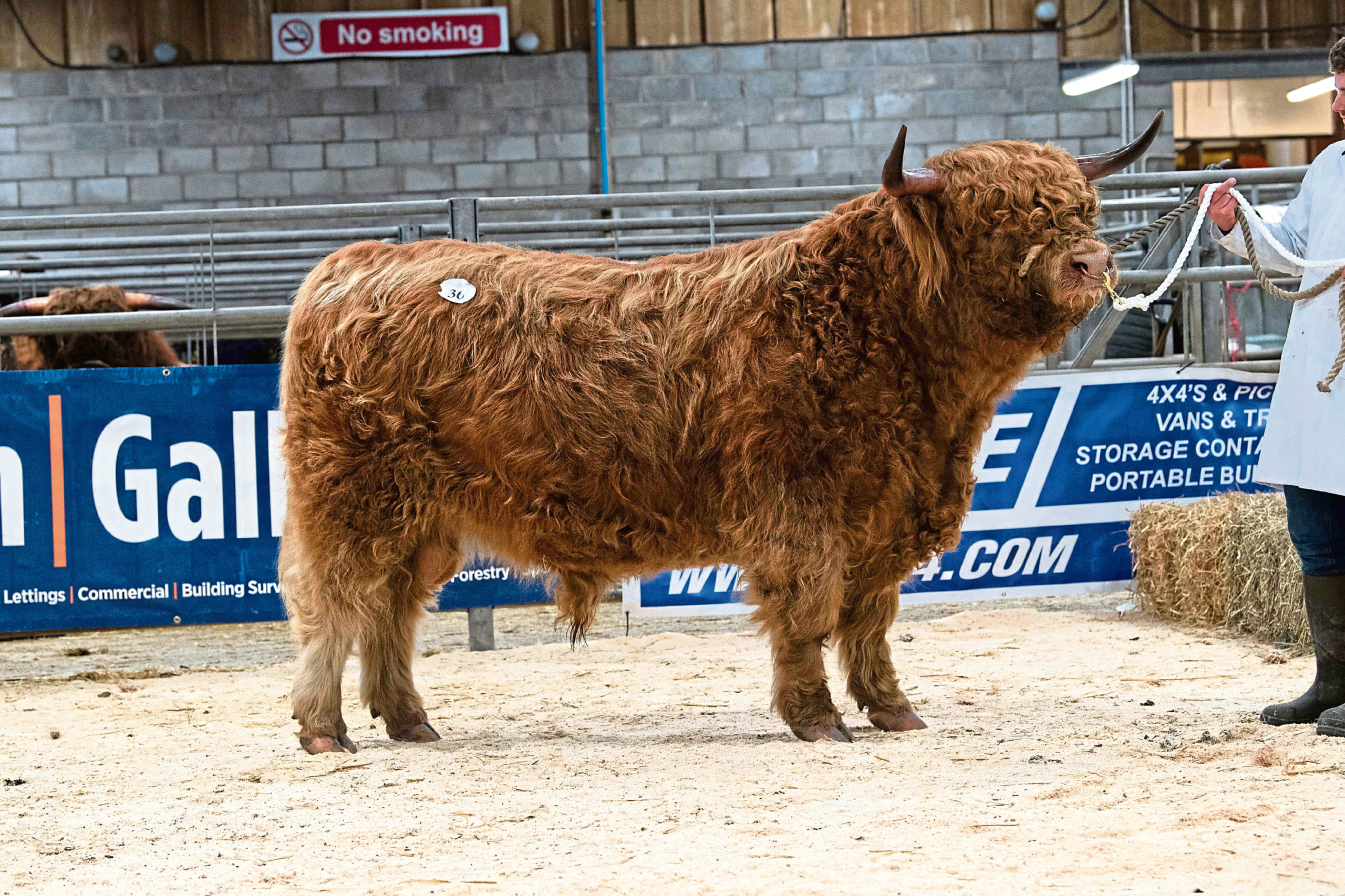 Muran Vallay of Ardbhan sold for the top price of 6,800gn at the breed sale in Oban.