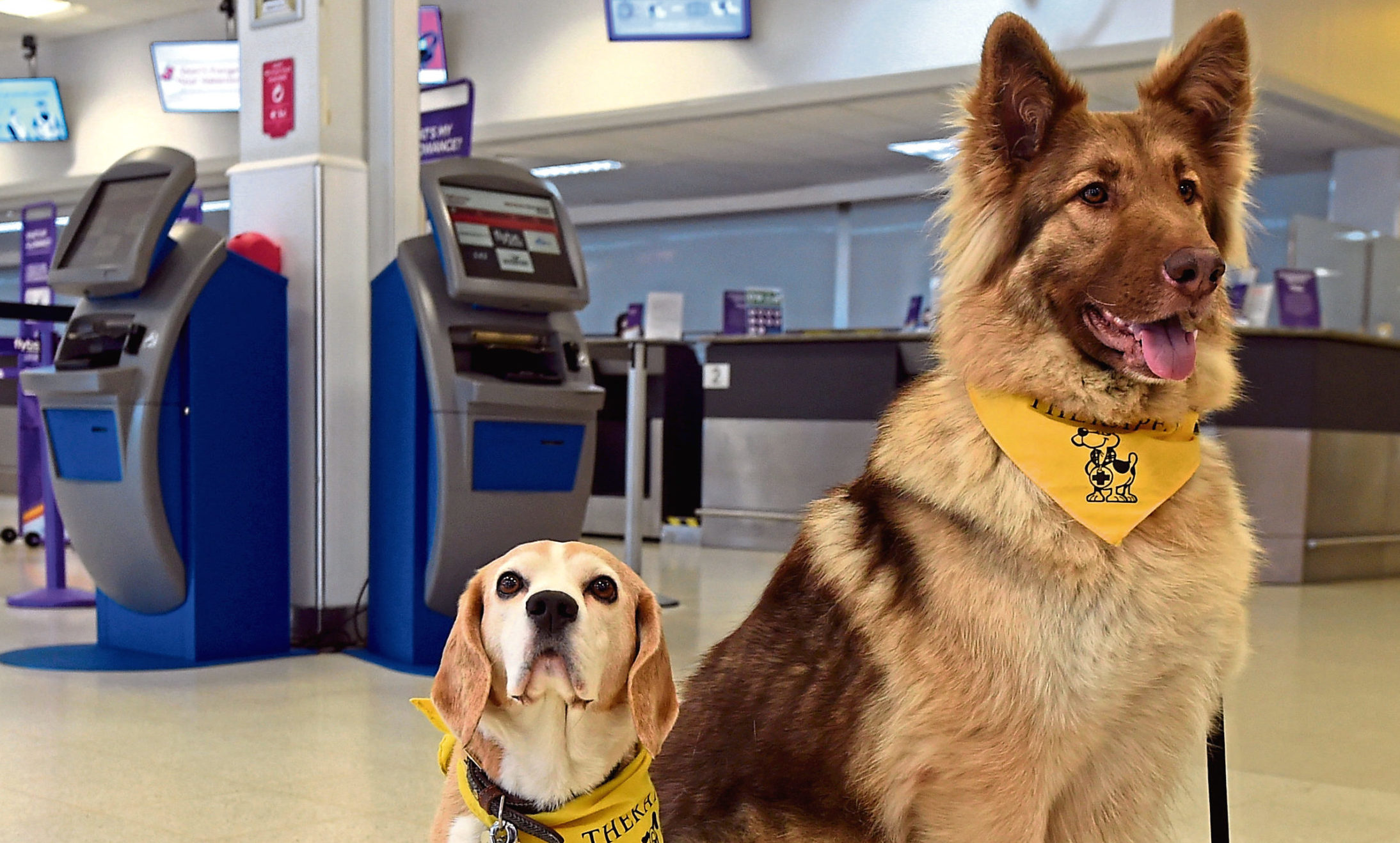 Noodle and Tweedie Bear at Aberdeen airport. Picture by Jim Irvine