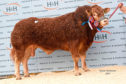 Goldies Olympia was overall champion and sold for 30,000gn.