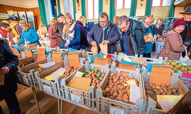 Strathmore Tattie Day. Picture by Steve MacDougall