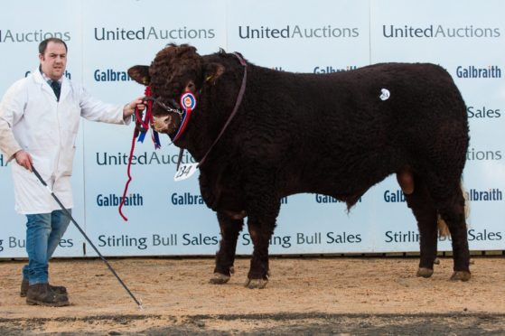 Strathallan Navigator topped the Salers sale at 8,000gn.
