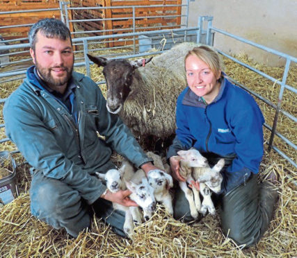 Kevin and Emma Reid with their ewe and her five lambs.