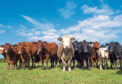Mr King warned of a decline in beef cattle numbers.