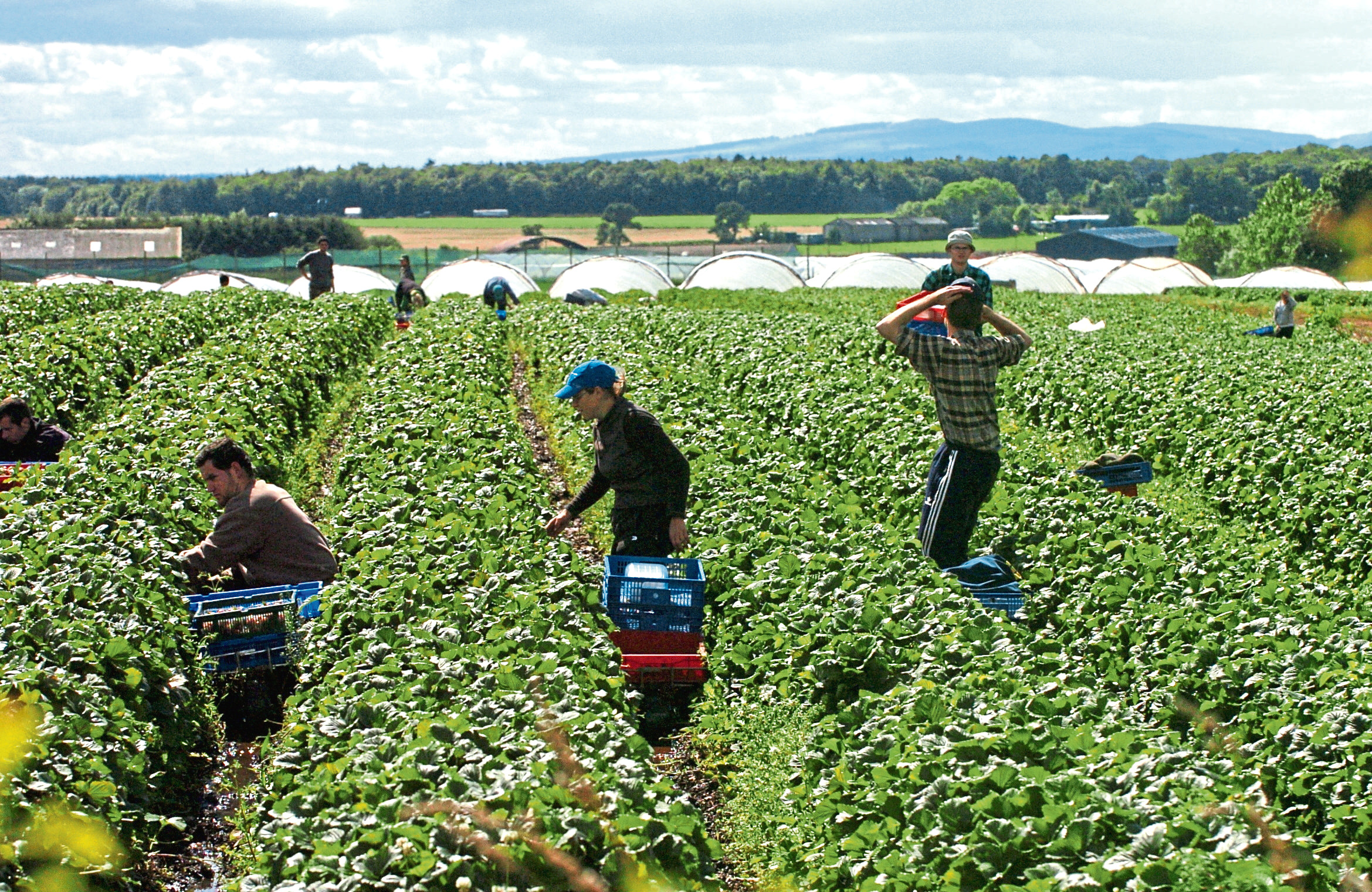 The committee will assess the impact of the immigration proposals on the food and farming sectors.