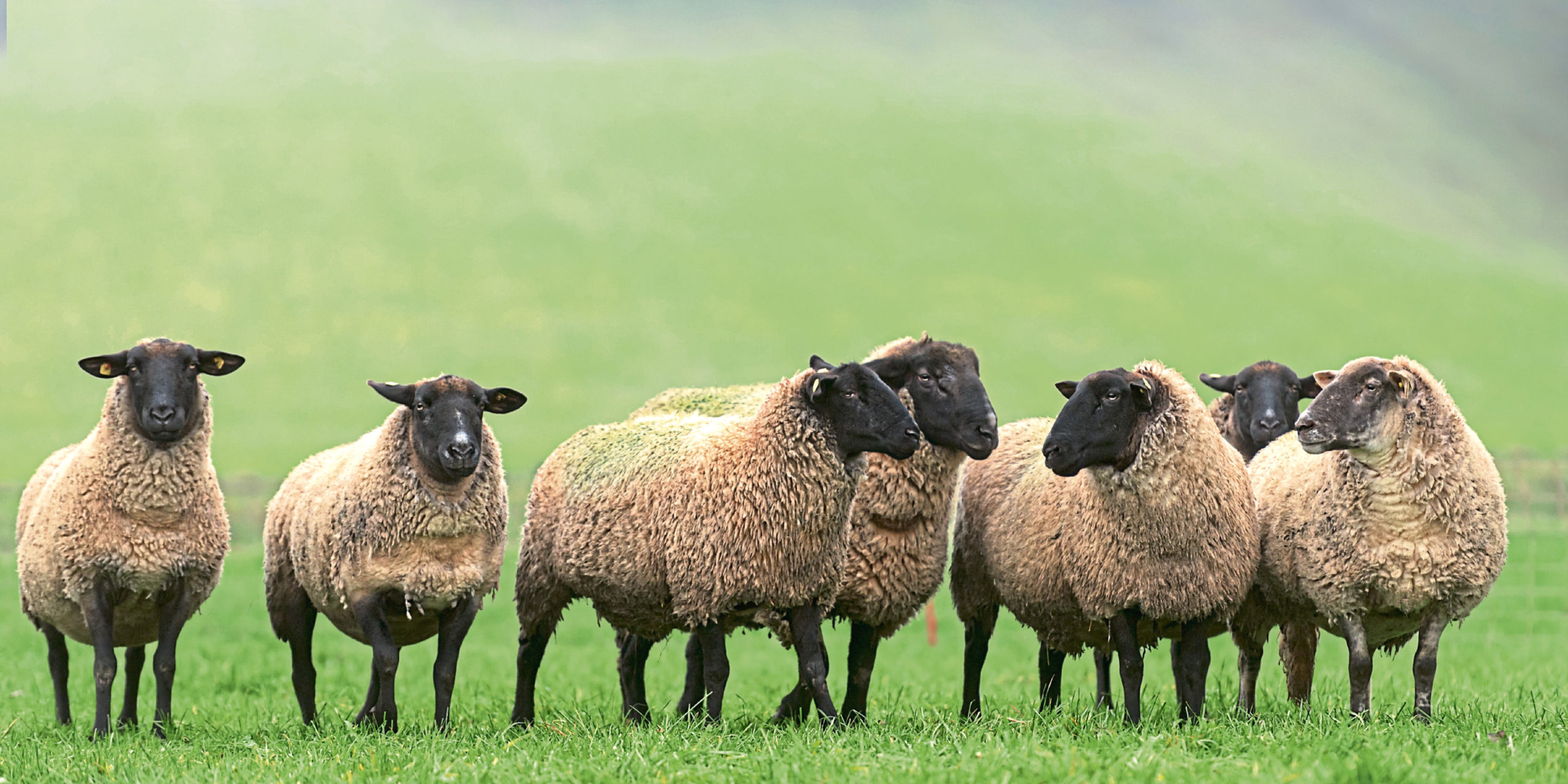 Farmers have been told insurance will not cover business disruption caused by coronavirus.