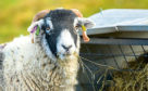 NFU Mutual is urging farmers to take steps to deter rustlers