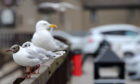 Gulls in Stonehaven. Picture by Kath Flannery.