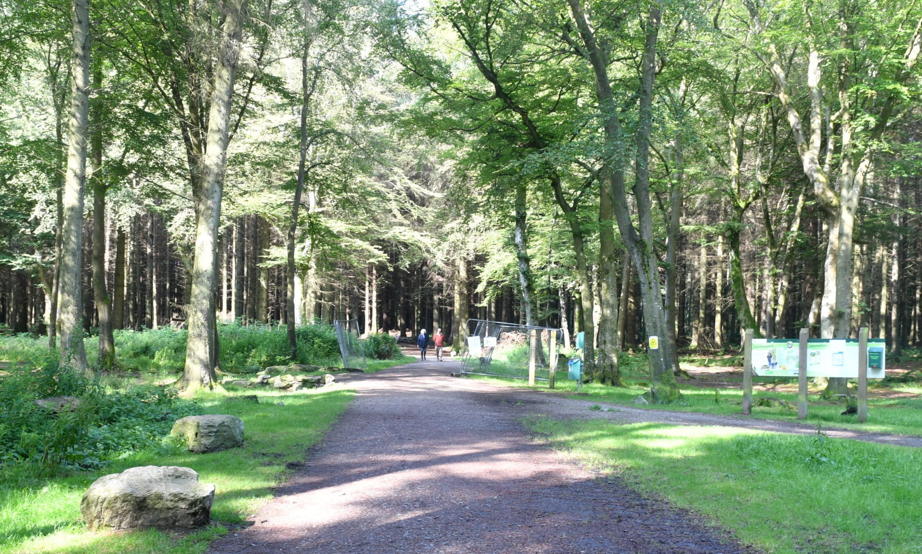Countesswells Woods