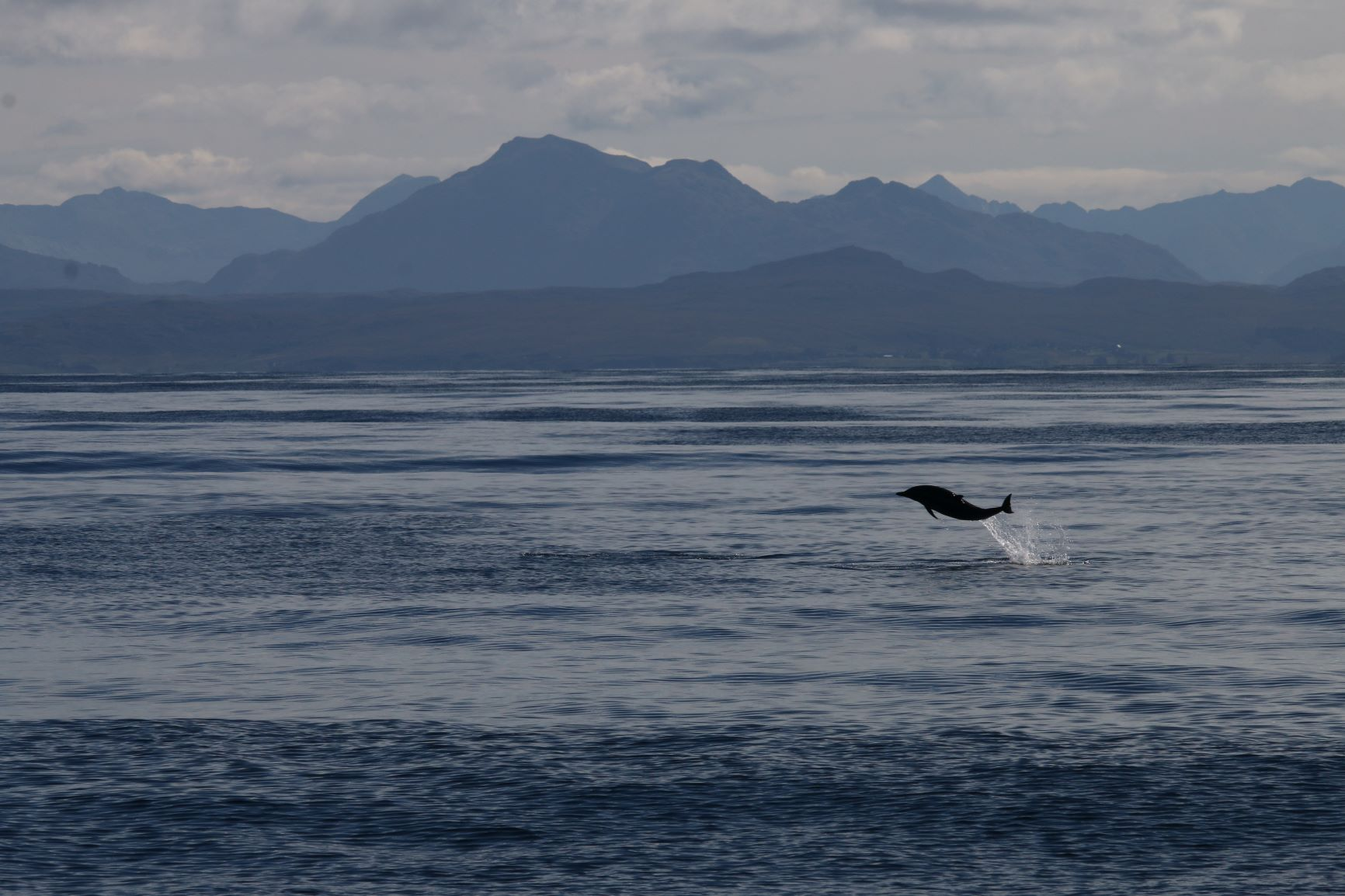 The Hebridean Whale and Dolphin Trust have received funding as part of the £1.3million share