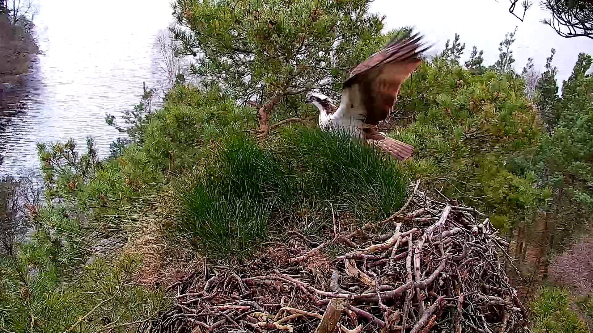 LM12 landing (Scottish Wildlife Trust)