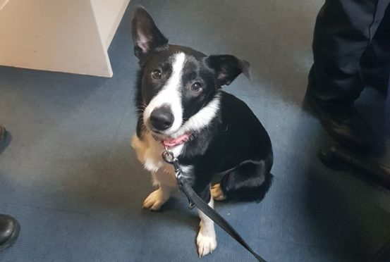 Police have found this missing collie near a recycling centre.