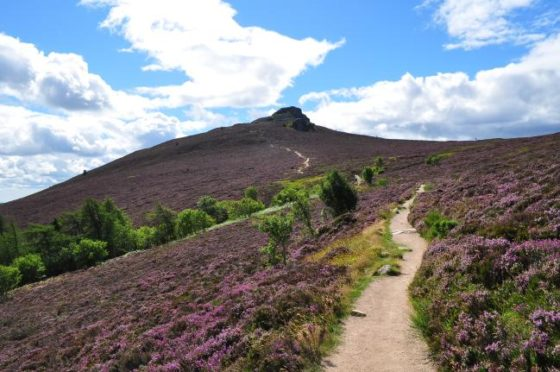 The view up Bennachie. Photograph courtesy of the Bailies of Bennachie conservation group