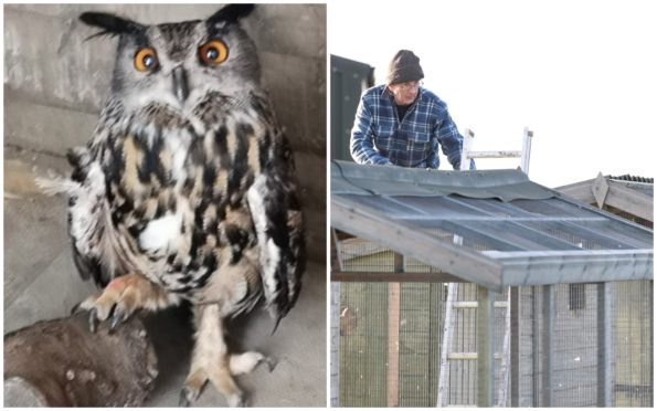 'Cooky' the eagle owl is recovering at the New Arc animal rescue centre (right).