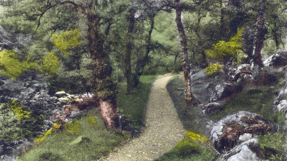 Carnegie's Fairy Glen